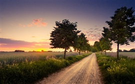 Preview wallpaper Tree field road landscape at sunset