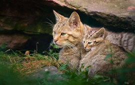 Wildcat motherhood with kitten
