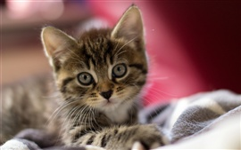 Preview wallpaper Cute kitten, attractive face, eyes, ears, close-up