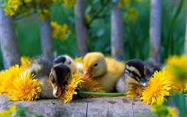 Preview wallpaper Cute little duck with yellow daisy