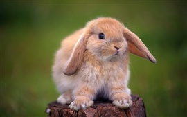 Cute rabbit standing on a tree stump