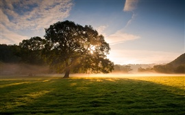 Early morning beauty, trees, grass, fog, sunrise, soft light