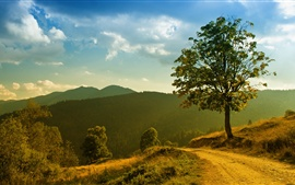 Mountain forest trees landscape, grass footpath, morning sun and clouds
