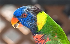 Preview wallpaper Parrot close-up, blurred background