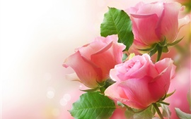 Preview wallpaper Pink roses, green leaves, bokeh photography