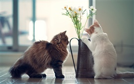 Preview wallpaper Two kittens and daisies