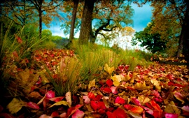 Preview wallpaper Autumn forest, autumn leaves on the grass