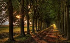 미리보기 배경 화면 대로, 태양, 나무, 도로