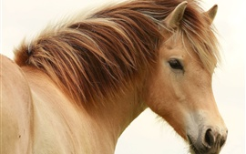 Preview wallpaper Brown mane horse close-up