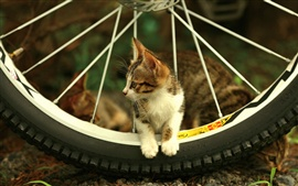 Preview wallpaper Cat and bicycle wheel