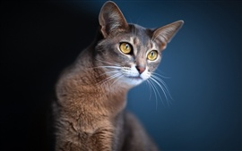Cat close-up, blue background