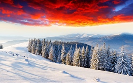 Cold winter, thick snow, sunrise glow, forest, mountains