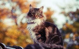 Cute cat in the warm sun