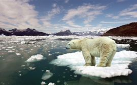 Preview wallpaper Ice floes, sea water, melting snow, polar bear