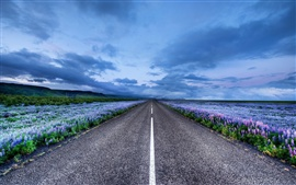 Iceland landscape, road, meadows, flowers, horizon, blue sky