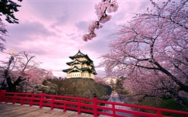 Preview wallpaper Japan Hirosaki Castle, pink cherry blossoms