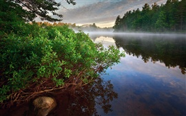 Morning landscape, fog, river, bush, forest