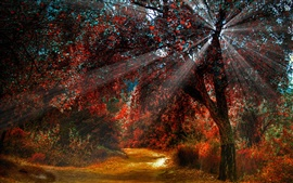 Nature red leaves in autumn, beautiful scenery, paths, sun light