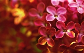 Red lilac macro photography