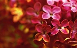 Vorschau des Hintergrundbilder Red lilac Makrofotografie