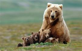 A foto de família dos ursos marrons