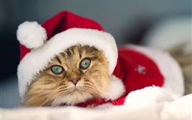 Preview wallpaper The kitty also love Christmas