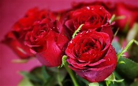 Preview wallpaper Water droplets flowers red roses close-up