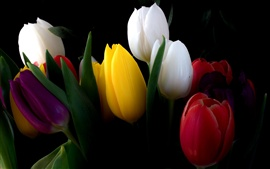 Preview wallpaper White, yellow, red, tulip flowers