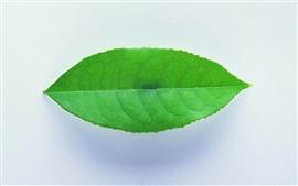 Uma folha verde close-up, sombras