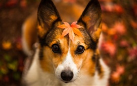Autumn dog, red leaves, fuzzy background