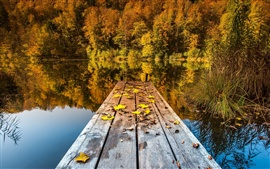Autumn lake, woods and deciduous
