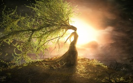 Preview wallpaper Beautiful tree wizard, the sun bright, creative design