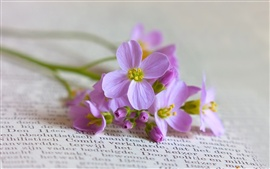 Preview wallpaper Books with purple flowers still life close-up