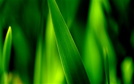 Close-up of green grass blades, leaves soft focus photography