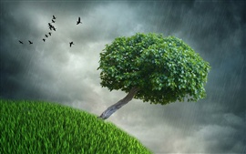 Creative pictures, rainy, lonely tree, green leaves, grass, birds, dark clouds