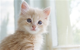 Preview wallpaper Cute kitten close-up, cat's whiskers, eyes, facial expressions