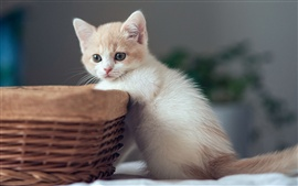 Preview wallpaper Cute kitten with basket