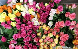 Diverse colors of roses world