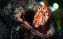 Preview wallpaper Red feather owl in the forest
