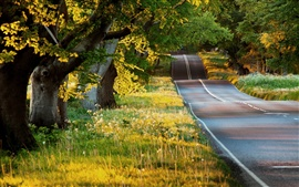 Summer landscape, road, trees, grass, sunshine