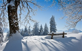 Winter beautiful landscape, thick snow, the trees, the sun
