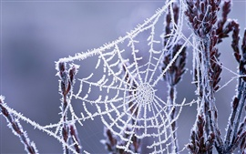 Preview wallpaper Winter cobwebs