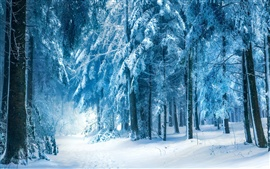 Winter landscape, snow forest