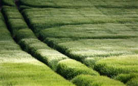 Lush grassland scenery