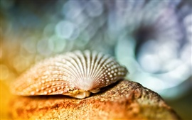 Preview wallpaper Seashell close-up, bokeh