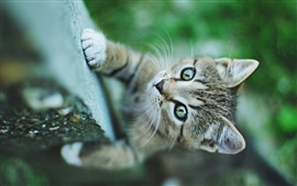 Preview wallpaper Small cat green eyes, climbing