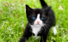 Ficha de Lune Black-cat-blue-eyes_s