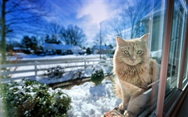 Cat in the window, snow winter