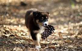 Cute puppy picking up pine cones