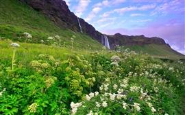 Исландия утром пейзажи, горы, трава и цветы, водопады, сиреневый небо, облака